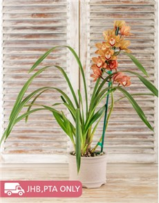flowers: Cymbidium Orchid in Pottery!
