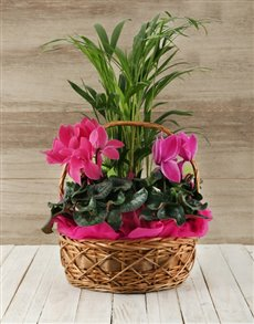 flowers: Basket of Indoor Plants!