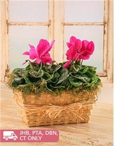 flowers: Trough of Plants!