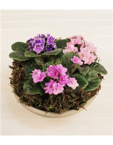 gifts: African Violet Plant!
