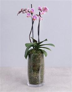 flowers: Phalaenopsis Orchid in Glass Vase!