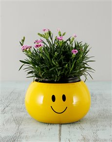 gifts: Dianthus in a Smiley Face Pot!