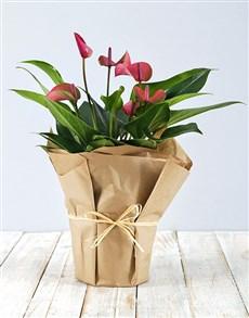 flowers: Anthurium in Craft Paper!