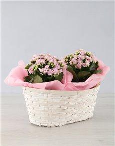 flowers: Double Kalanchoe Basket!