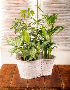 plants: Trio of Green Plants in a Basket!