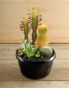 plants: Cactus Garden!