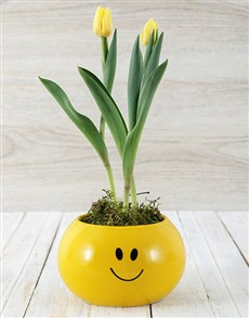 gifts: Yellow Tulip Plant in Smiley Pot!