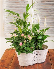 flowers: Mix of Flowering and Green Plants in a Basket!