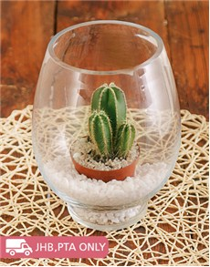 plants: Vase with Cactus and White Pebbles!
