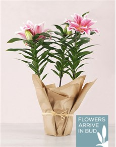 flowers: Rose Lily in craft Paper!