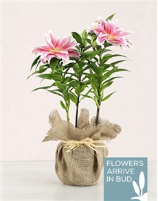 flowers: Rose Lily in Hessian!