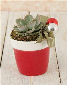 flowers: Santas Succulent Pot!