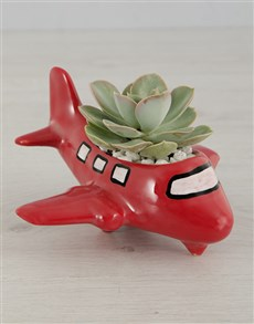 gifts: Succulent Ride of your Life!