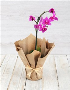 gifts: Miniature Pink Orchid in Craft Paper!