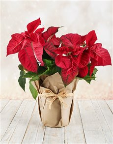 flowers: Poinsettia Wrapped in Craft Paper!