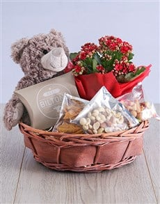 gifts: Enchanting Kalanchoe Teddy in Willow Basket!