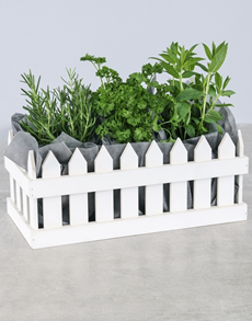 flowers: Potted Thyme Herbs in Craft Paper!