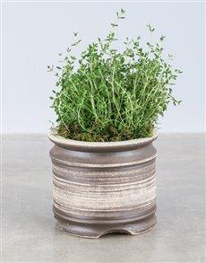 plants: Thyme Herbs in Ceramic Pot!