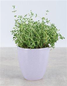 plants: Thyme Herbs in Glazed Pot!