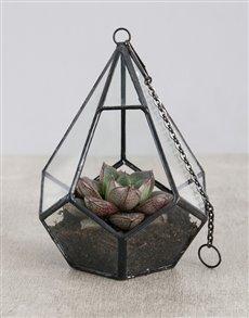 plants: Succulent in Looped Geometric Vase!
