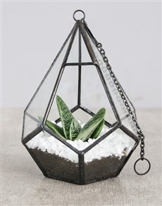 gifts: Succulent in Looped Vase White Stones!