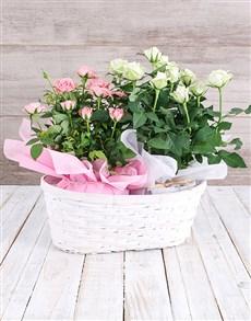 plants: Double Rose Bush Basket!