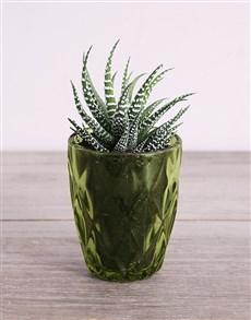 flowers: Desert Arrangement in Green Votive!