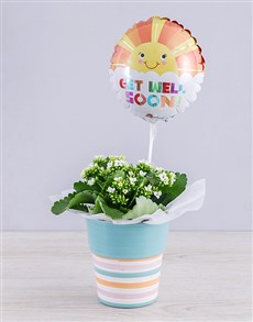 flowers: White Kalanchoe Plant and Get Well Balloon Gift!