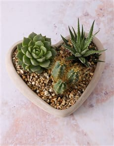 plants: Succulent Love Story Cement Vase!