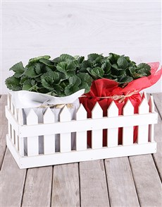 flowers: Strawberry Plants in Picket Fence!