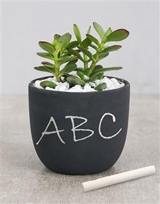 plants: Succulent Chalk Pot!