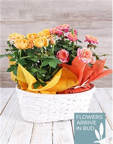 flowers: Asiatic Lily in Stay Wild Vase!