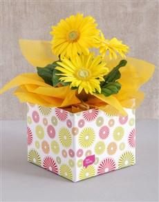 flowers: Yellow Mini Gerbera Plant Box!