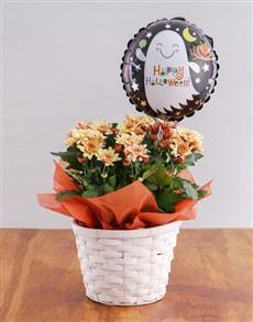 gifts: Orange Halloween Crysanthimum Basket!