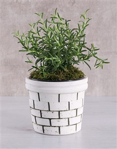 gifts: Rosemary Plant in Brick Pot!