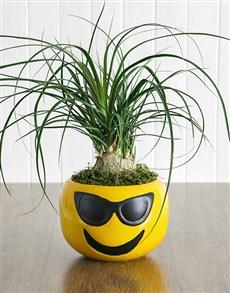 flowers: Pony Tail Palm in Sunglasses Emoji Pot!