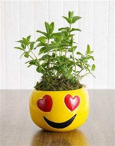 plants: Herbs in Heart Eyes Emoji Pot!