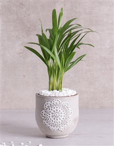 gifts: Love Palm in Grey Patterned Vase!