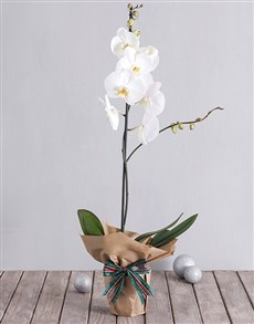 flowers: White Phalaenopsis Orchid in Craft Paper!