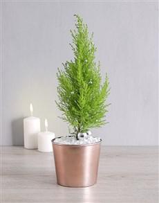 gifts: Goldcrest in Copper Pot!