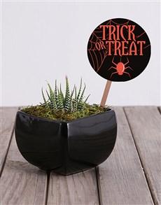 plants: Trick or Treat Cactus in Black Vase!