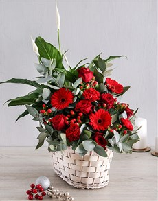 plants: Mixed Red Basket!