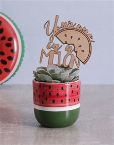 gifts: Succulent in Watermelon Pot!