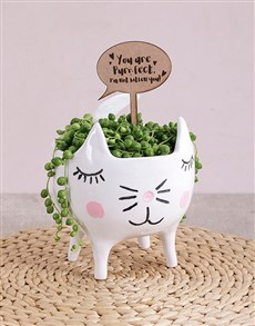 flowers: String of Pearls Plant in Cat Pot!