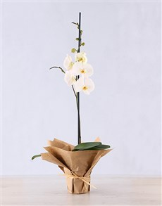gifts: Phalaenopsis Orchid in Craft Paper!