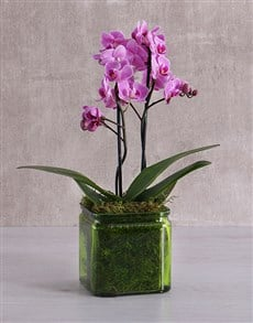 flowers: Mini Orchids in a Square Green Vase!