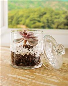 plants: Succulent in a Medium Jar!