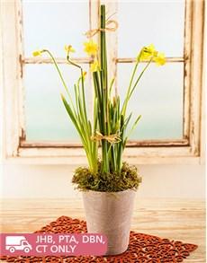 flowers: Daffodil Arrangement!