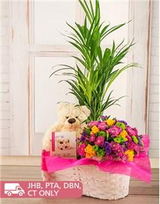plants: Rush of Colour Plant Basket!