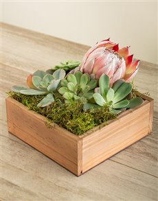 flowers: Lucky Pony South African Beauty Crate!